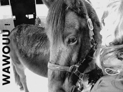 ~Poney le plus important : << Prometez moi que si un jour on tombe vous releverez mon cheval en premier>> Parce que pour lui je me battrais jusqu'a mon dernirer souflle