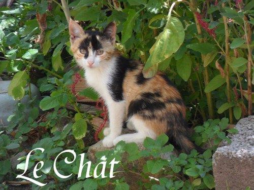 Le Chat -  by SweetKitten