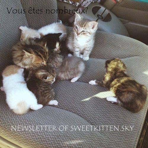 Newletter -  by SweetKitten
