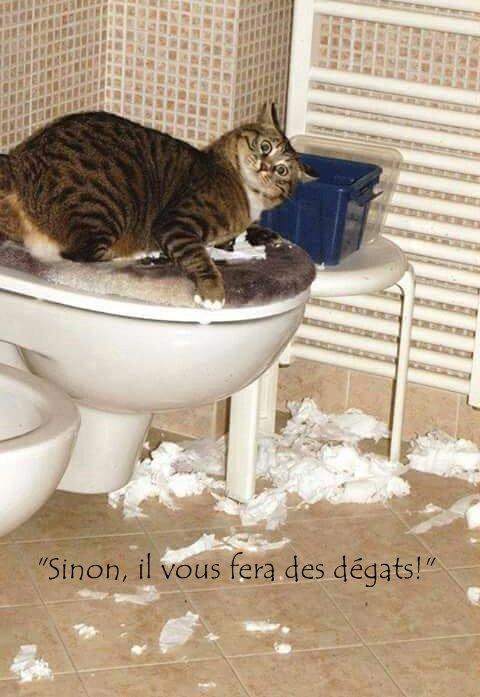 Les règles du chat  - by SweetKitten