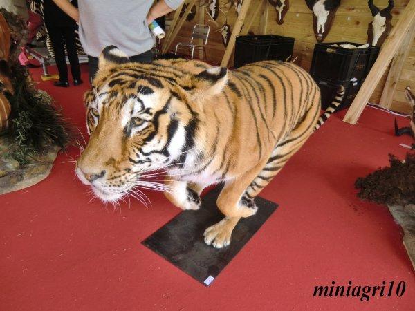 Game Fair 2012 au domaine national de Chambord le 23 Juin dernier