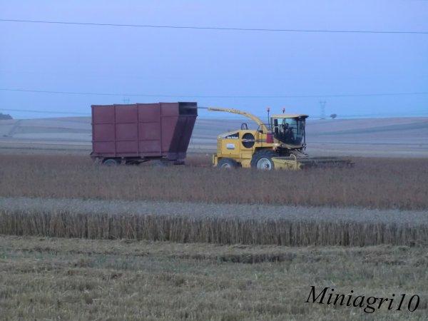 Recolte de l'oeillette 2012
