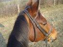 Photo de chevaux-bonheur