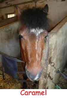 un poney tout mignon