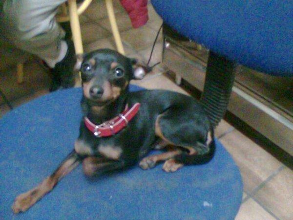 Mon chien, je l'aimais tant </3 ♥