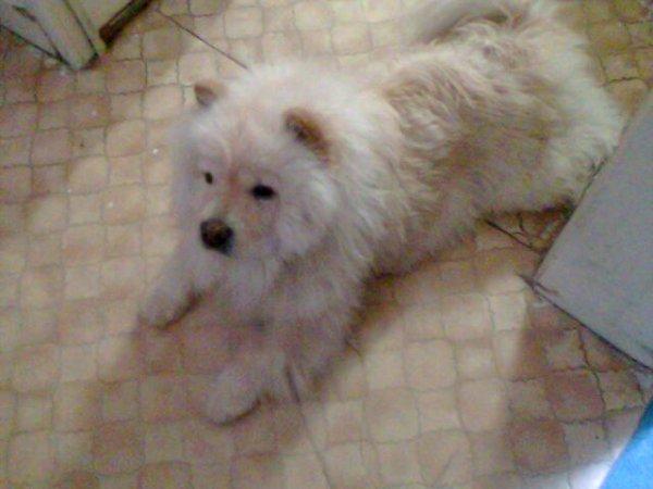 Ma deuxième chienne, elle me manque cruellement </3 ♥