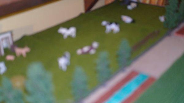 le prés a vache
