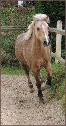 On dit que dans un couple, le cheval est le reflet du cavalier. Ma fierté.