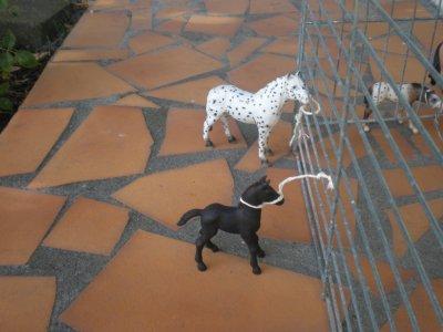 Arrivée de 4 nouveaux chevaux mais d'abord des images de où ils viennent