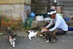 Tashirojima, l'île aux chats