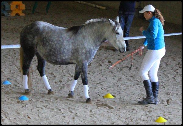 Notre cheval est notre reflet, notre miroir. Il est ce que l'on en fait & deviens de qu'on lui donne..