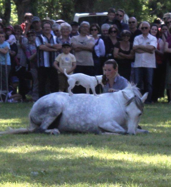 Fête du cheval à St Félicien (07), dimanche 18 mai 2014