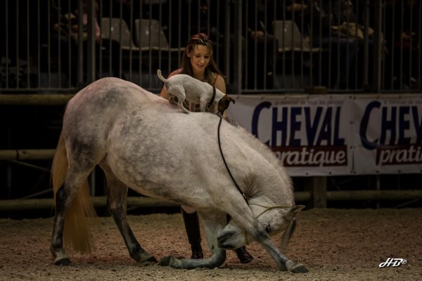 Salon du cheval de Paris, du 2 au 7 décembre 2014