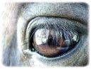 Photo de x-L00ve-Horses-x