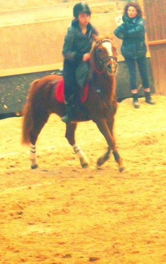 Concour au CHA ; 30 /01 /2011