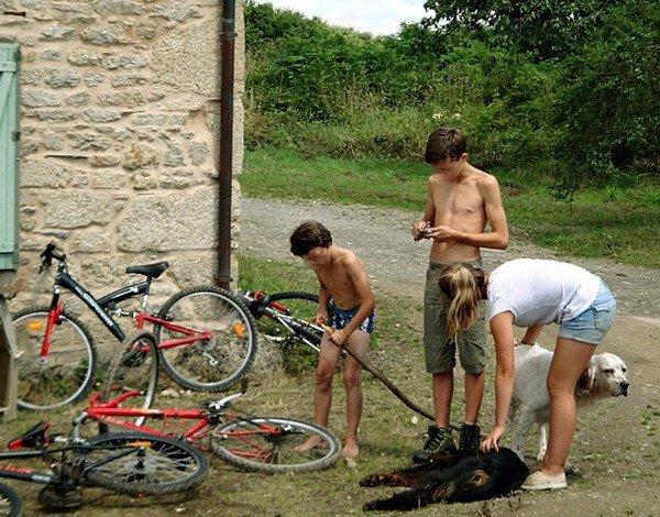 Bienvenue Aidons-les-animaux