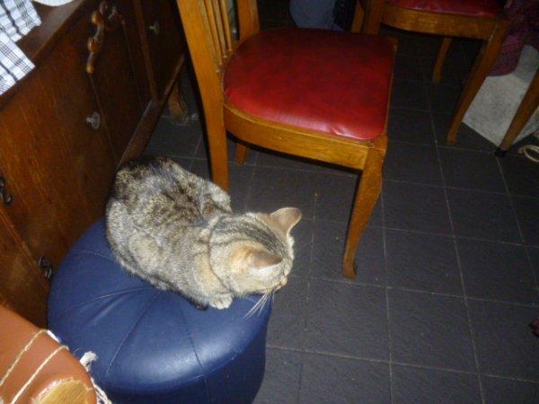 déjà 30 semaine que tu es partie mémère - Hommage as mémère une de mais chatte décède