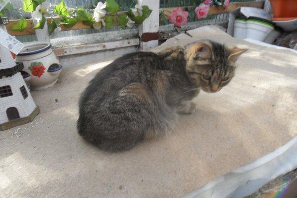 déjà 31 semaine demain que tu es partie mémère - Hommage as mémère une de mais chatte décède