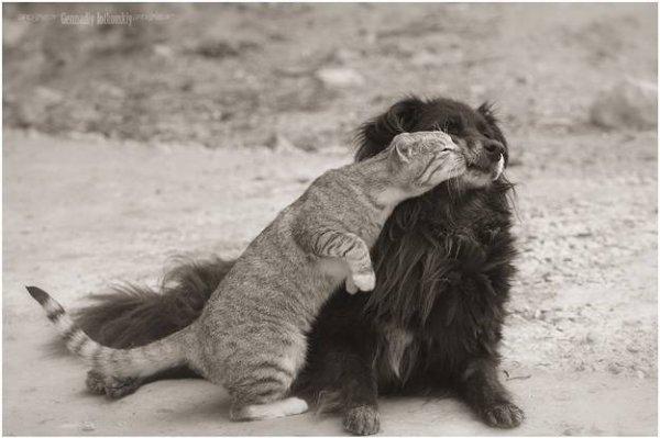 comme chien et chat  !!!!!