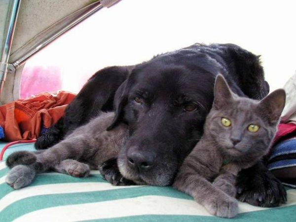 chiens chats No2