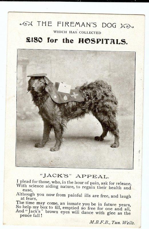 photo d'une ancienne carte  de chien de recherche anglais