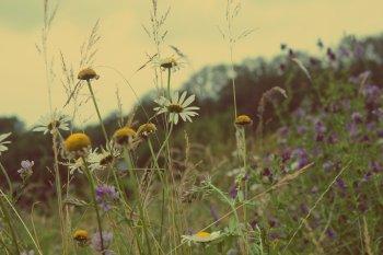 Les difficultés vous rendent plus fort, mais visiblement pas plus heureux .