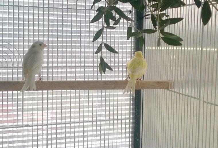 Bourse de Lambesc : retour avec 3 oiseaux