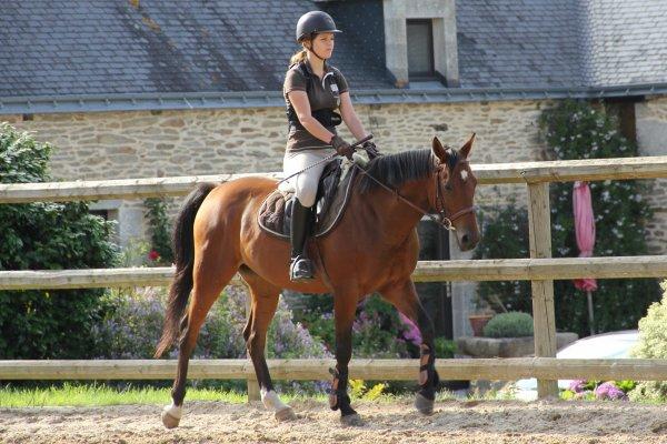 # L'équitation est les seul sport individuel qui se pratique à deux