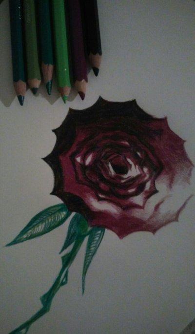 Rose | Commande