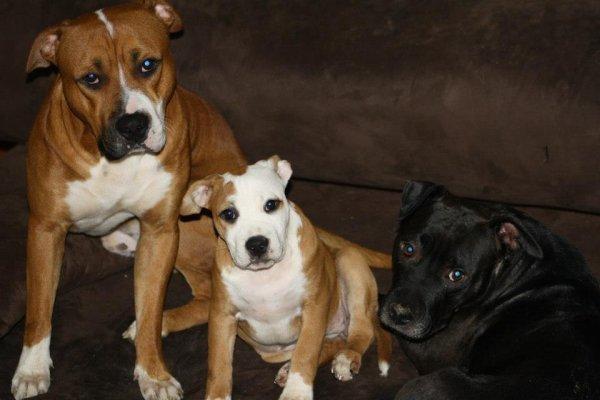 Tyson , TeSs, Tara
