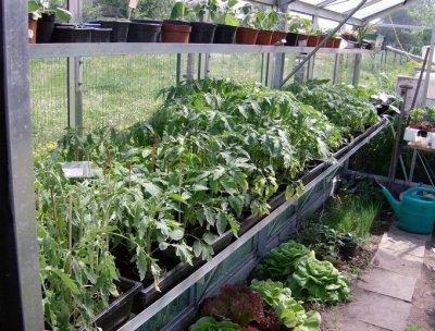 plants de tomates 2011