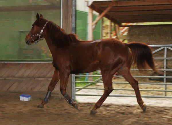 Mon cheval, c'est un championnnnnnn !