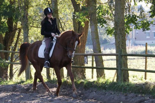 Dressage ? There we are !