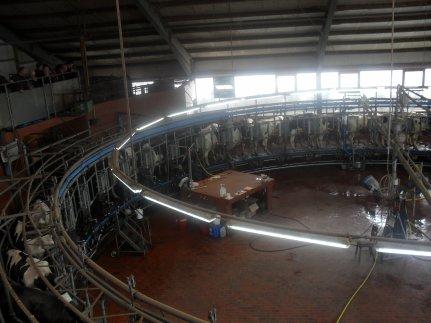 visite d'une ferme allemande de 1500 vaches laitières