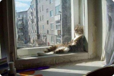 Des chats trop cool