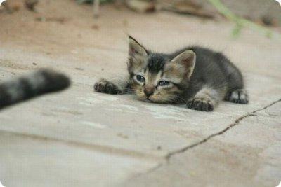 d'autres chats cool numéro 2