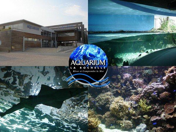 Aquarium de la rochelle les parcs d 39 attractions fran ais - Le boute en train la rochelle ...