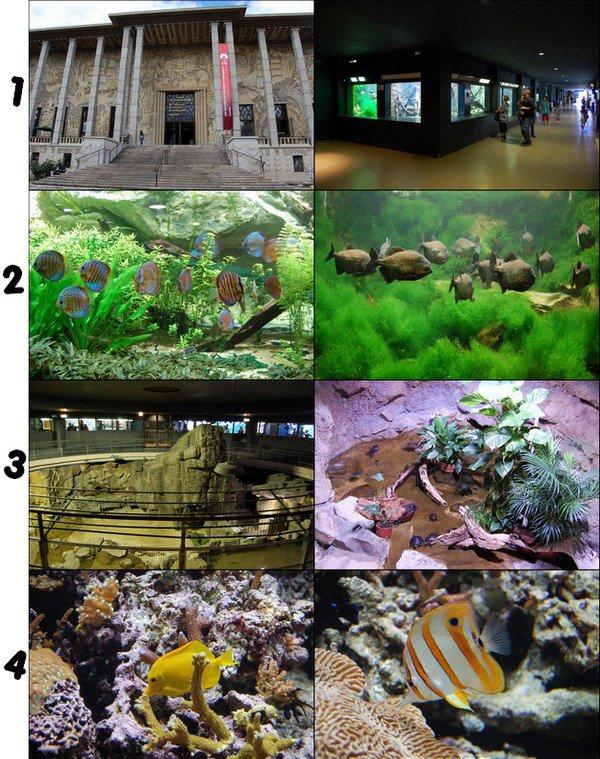 Aquarium de la Porte-Dorée (Paris)