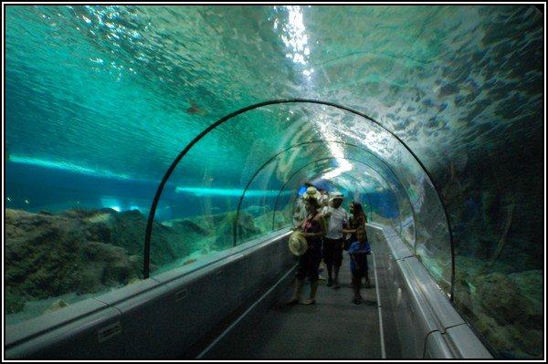 articles de parc attraction tagg 233 s quot aquarium quot les parcs d attractions fran 231 ais skyrock