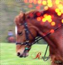 Photo de Riding-stuff