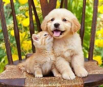 Chat & Chien
