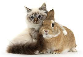Chat & lapin