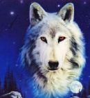 Photo de mes-loups-et-moi