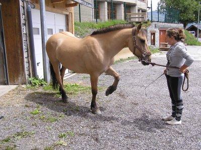 """''Faites un sourire à votre cheval... mais pas en tirant sur les rênes ! """""""