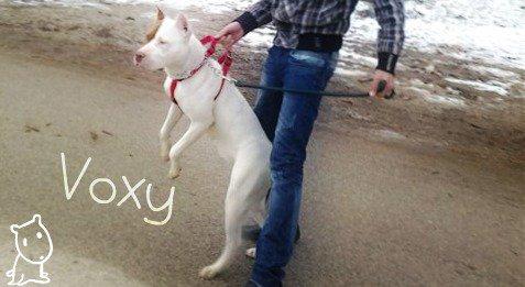 Ma chienne Voxy .. !!