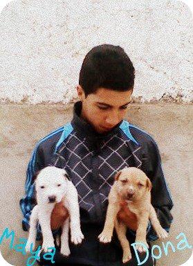 Moi et mes deux chien