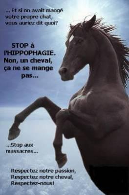 NON a L'IPPOPHAGIE !!!!