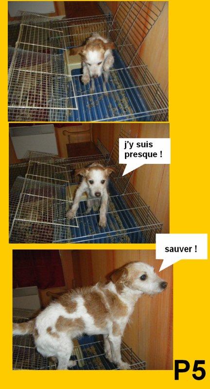 aliya sauve teuf le chien !