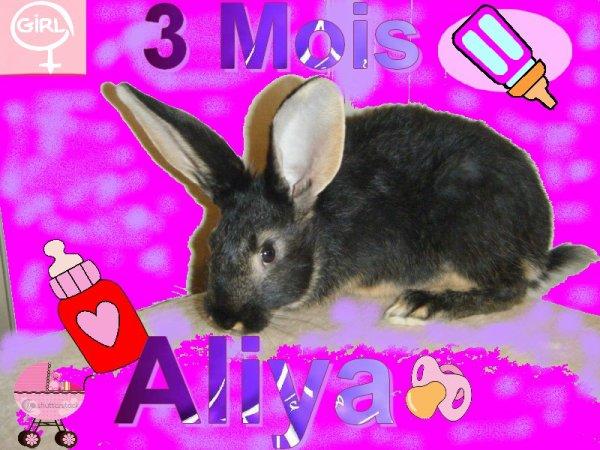Aliya (l)