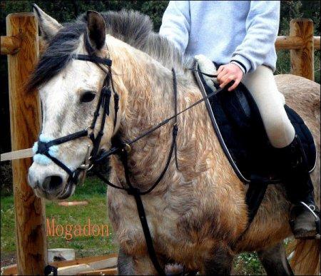 L'équitation ; Ma vie ! Mogadon De Malo Mon Gros Bébé .. ! [ Centre De Ma Tante : Jazz De Roc ; A Conte ]